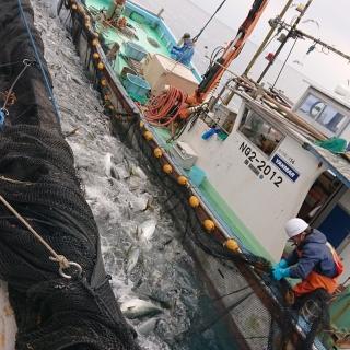 漁、最終日!!