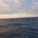 少漁 2021/9/30